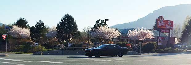 Hyrbil utanför Tim Hortons på våren